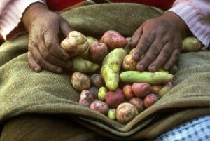 Aardappelen, Bolivia