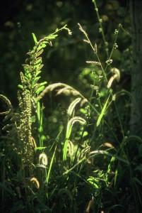 Gras en zonlicht, Argentinië